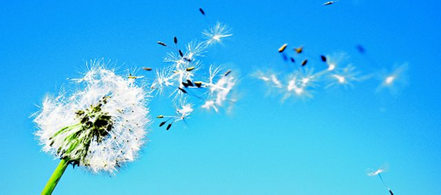 Dandelions actually began growing last fall and will be troublesome this season.