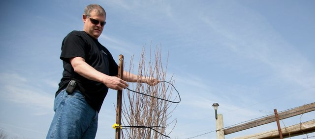 "Oskaloosa resident Scott Clabaugh demonstrates how to use his ""tomato lasso."" Clabaugh sought a solution to the hassles of tomato cages after last season and developed a means of supporting the plants to a t-post with a clamp and cable line."