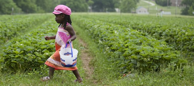 .Mia Jubber, 3, walks with a bucket for strawberry picking May 23 at Wohletz Farm, 1831 N. 1100 Road.