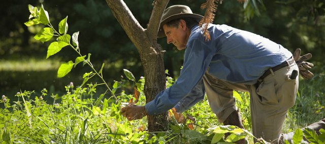 Charlie NovoGradac trim trees and weeds around his grove of chestnut trees on his 20 acres of property north of Lawrence. NovoGradac is a member of Growing Lawrence