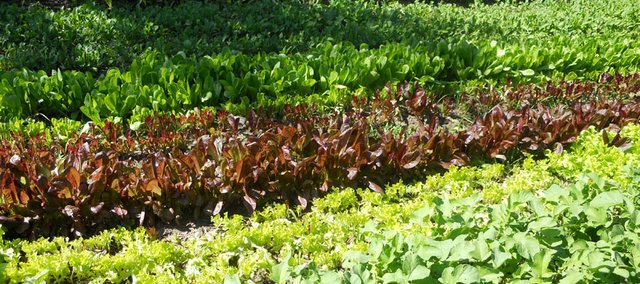 It's never too early to start preparing your garden for fall. Plant frost-resistant vegetables such as kale, spinach and radishes. Lay off fertilizer, as many of these plants have low nutrient requirements.