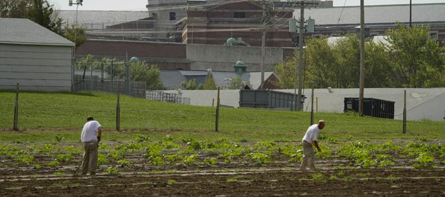 Inmates at Leavenworth Federal Prison work in the garden area that is part of its Therapy and Mentoring Horticulture Program.