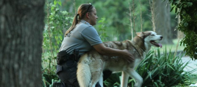 Lawrence Animal Control officer Linda Durkes, works with a Husky until the owner produces its papers on shots. The dog reputedly jumps fences and the neighbors complain.