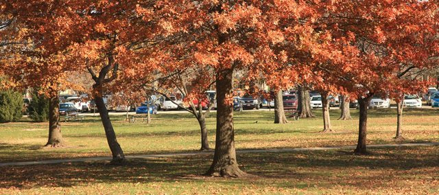 If the grass near the base of an oak tree is dying, it likely isn't due to excess acidity from fallen leaves or acorns. Dead or yellow grass at the base of a tree is more likely a sign of root competition or other factors.