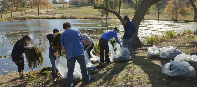Volunteers bag hundreds of pounds of surface scum pulled from Potters Lake Sunday, Nov. 13, 2011. Using a boat and a rope to circle around areas of vegetation, the scum was pulled to shore by a truck in an attempt at preventive maintenance of the campus lake.