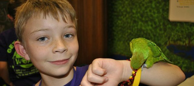 "Ryley Wheat, 9, a third-grader at Quail Run Elementary, with his favorite bird, ""Sassy Girl."" The bird — a rare lorikeet — was stolen from Pet World on Feb. 6. Ryley had already saved $400 of the $900 he needed to purchase the bird when she was stolen."