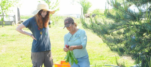 Stephanie Thomas, right, shows volunteer Hannah Sherman, of Baldwin City, how to wash and cull radishes harvested from the farm Thomas owns south of Baldwin City. Her Spring Creek Farm sells fresh vegetables to members of a subscription service, at farmers' markets, Baker University, The Merc and a few local restaurants.