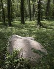 "Sunlight strikes a boulder, a marker for a grave site, in the green burial area at Oak Hill Cemetery. Only native plants, flowers and grasses are allowed as decorations and no cut, machined or polished markers are permitted, although ""engraved natural, flat rocks, or boulders"" are allowed."
