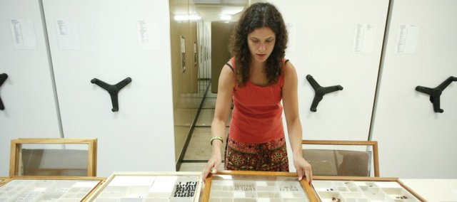 Jennifer Thomas, assistant collection manager for the division of entomology at Kansas University pulls trays of specimens for display during a tour on Tuesday, June 19, 2012.