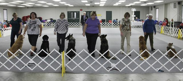 Dog owners walk back to their sitting dogs during an obedience event at the Lawrence Jayhawk Kennel Club all-breed dog show Saturday, Oct. 13, 2012, at the Douglas County Fairgrounds. The event continues today.
