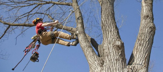Hanging by a rope some 30 feet to 50 feet high in trees is a daily job for arborist Dan Parker-Timms, who owns Shamrock Trees Services Inc. of Lawrence.