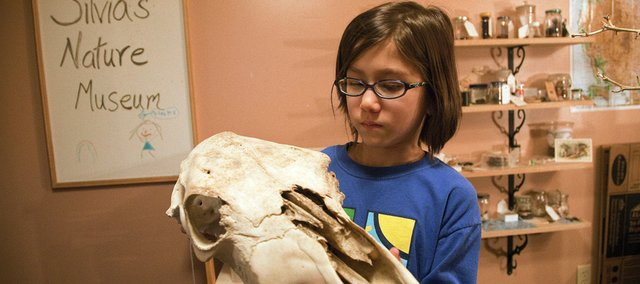 Silvia Liu, 8, has been collecting natural objects, like this skull, since she was 4 and has created her own museum in the basement of her family home.