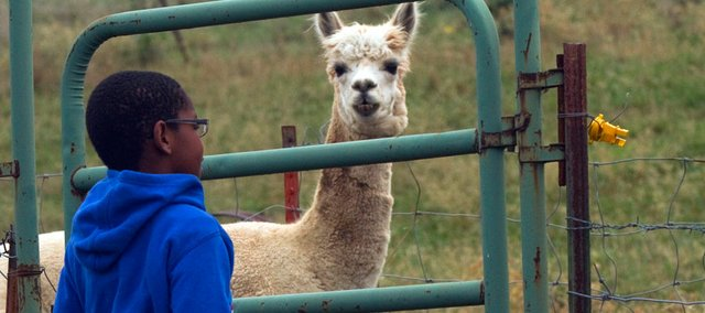 Savion Gislar, age 8 of Baldwin, came eye to eye with an alpaca during the Annual Farm Tour.