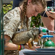 Pet World staff and volunteers and area veterinarians give oxygen to reptiles rescued from the store by Lawrence firefighters after an afternoon fire on Monday, May 25, 2015.