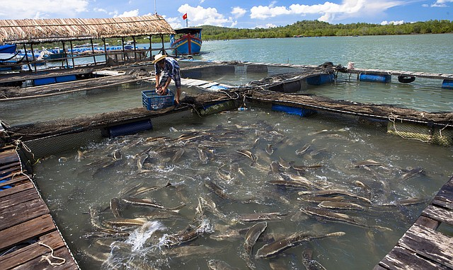 Eating some fish may not be as healthy as you think for Farm raised fish