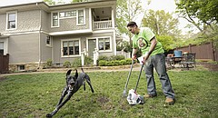 Dawn Terry scoops pet waste from the backyard of Lawrence residents Sarah and Aron Cromwell, while their dog Dez happily gallops around her on Monday, April 18, 2016. The Cromwells are among Terry's regular clients whom she scoops for since starting up her business, Call of Doody, early this year.