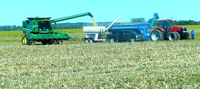 A local farm transfers corn from a combine to a semi Wednesday in a field in the Kansas River bottoms east of Lawrence. The local fall harvest is underway with about 25 percent of the corn harvested, according to local elevator managers. The crop is good but not what farmers hope in a year of depressed grain prices.