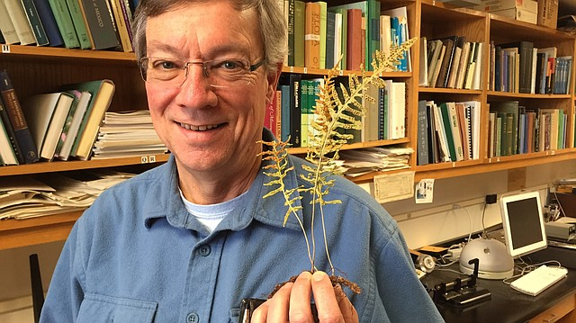 Chris Haufler is a professor of ecology and evolutionary biology at the University of Kansas. He researches plant biology, including the genetics of ferns. (AP PHOTO/Sara Shepherd/Lawrence Journal-World)