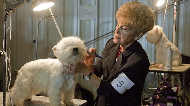 In this file photo from October 2013, Pamela Johnston, of Adrian, Mo., grooms her West Highland terrier, Cruise, during Lawrence Jayhawk Kennel Club Dog Show at the Douglas County Fairgrounds.