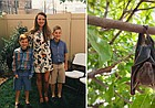 Shown at left is Michelle Crowell, a Lawrence accountant who had a run-in with a bat in her home, with her sons Rooney, 11, and Ollie, 9. At right is a stock photo of a bat.