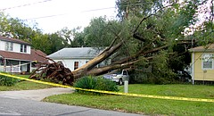 A tree at 212 North Fourth uprooted during a storm on Oct. 14, 2017, crushed a pickup and damaged a neighboring house. The National Weather Service in Topeka said winds that may have been as strong as 70 mph caused the extensive damage in North Lawrence.