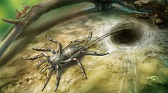 Paul Selden, director of the University of Kansas Paleontological Institute, was among an international team of scientists that recently discovered this ancient spiderlike creature. The 100 million-year-old arachnid had fangs, male pedipalps, four walking legs and silk-producing spinnerets at its rear, in addition to a long, whiplike tail.