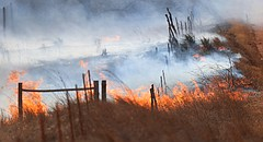 Firefighters battle a fire north of Harper, Tuesday, March 6, 2018. (Bo Rader/The Wichita Eagle via AP)
