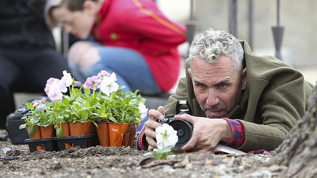 British artist Paul Harfleet photographs a pansy that he planted just north of the Spencer Museum of Art on the campus of the University of Kansas, Friday, April 6, 2018. Harfleet, who is the creator of the Pansy Project, planted several pansies in various spots on the KU campus associated with homophobic abuse or homophobic incidents.