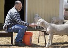 State Rep. Tom Sloan, R-Lawrence, is approached by one of the lambs at his sheep farm on Monday, April 16, 2018. Sloan, who has served in the Legislature for 24 years, announced Sunday evening that he will not seek re-election.
