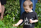 Finnegan Donnally, a three year old from Boulder, Colorado, releases leaf cutter bees in his grandparents' backyard bee sanctuary at 2112 Riviera Drive.