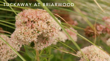 Briarwoodmain