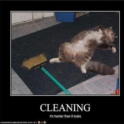 Funny Carpet photos   red carpet rug cleaning   carpet cleaning, shampooing