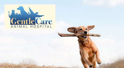 Gentle Care Animal Hospital
