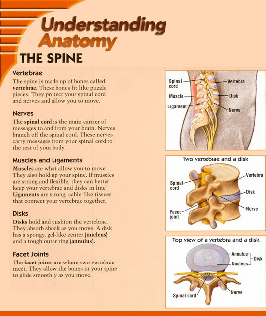 Understanding Anatomy: the spine