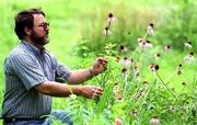 Steve Moring, a research scientist at KU's Higuchi Biosciences Center is part of the Great Plains Medicinal Herbs Cooperative to help farmers grow medicinal herbs as an alternative crop. Moring looks over some varieties of echinacea, also known as the purple-cone flower Friday at a North Lawrence test garden.