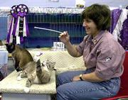 Judi DePont of Newark, Ill., plays cat fishing Saturday with her cat Yukon at the Kansas City Midwest Cat Club show at Douglas County 4-H Fairgrounds.