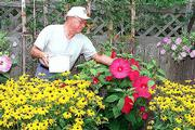 Floyd Temple, former Kansas University baseball coach, trims some hibiscus in his back yard. Temple took up gardening during his retirement and is especially proud of the results his seed-starting efforts.