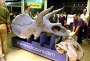 The new life-size cast of a Triceratops skull is unveiled at the Smithsonian Natural History Museum in Washington, D.C. The skull was created in the solid imaging lab of Shared Replicators, in cooperation with Tulsa Technology Center and Smithsonian scientists and technicians, when signs of deterioration of the original Triceratops skeleton were detected. The new technology used to replicate the skull also allows scientists to mold the skeletons into dramatic poses.