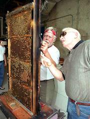 """Kansas University professor of entomology Orley """"Chip"""" Taylor, left, and Tom Swearingen, director of exhibits at the KU Natural History Museum, fill an observation case with a hive of honeybees. The new hive was installed Thursday at the museum."""