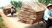 Two young Black Tai women manage to navigate their bicycles and a large load of palm branches, woven into panels, down a country road in northern Vietnam.