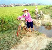 A mother and her daughter make their way along a rough path through the rice paddies near the end of the day north of Dien Bien Phu.