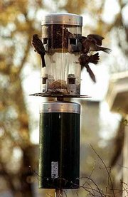 Small agile birds such as nuthatches, easily handle feeders that swing in the breeze.