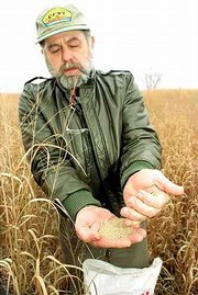 Joe King displays a handful of tiny switchgrass seeds. King, a longtime advocate of alternative energy sources, Saturday was in a field that he planted in northeast Douglas County.