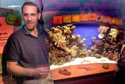 """Monterey Bay Aquarium senior aquarist David Cripe can't find """"Sparky,"""" a 4-inch mantis shrimp, who is the prime suspect in the disappearances of prized sea snails, barnacles and hermit crabs."""