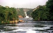 The Victoria Nile plunges down a ravine on its long journey to the Mediterranean in Uganda. When British explorer Samuel Baker came upon the explosion of water where the Nile bursts through a 130-foot ravine, he named it Murchison Falls in honor of the president of Britain's Royal Geographical Society.