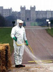 An estate worker sprays disinfectant onto a sterilized strip to protect the Crown Estate at Windsor from foot-and-mouth disease. Across Britain, people are being asked to keep away from the countryside and large areas of parkland, many footpaths and forests were closed to the public because of the foot-and-mouth outbreak. Windsor Castle is seen in the background.