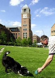 Shayla, a border collie, works with handler Robert Mayer while in the courtyard of Sprint World Headquarters in Overland Park. Sprint purchased the dog to herd the Canada geese that wander the grounds. When a wetlands area on the corporate campus is complete, Sprint officials fear that there could be as many as 20,000 geese in the area.