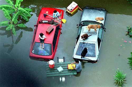 Photo a picnic table becomes a pontoon as rising water a picnic table becomes a pontoon as rising water from halls bayou forces a family and their pets to take refuge on the hoods of their cars parked in their watchthetrailerfo
