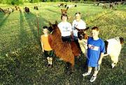 The Merritt family, from left, Ethan, Cindy, Gary and Matt enjoy a relaxing evening with their llamas this week at their home. Ethan and Matt will show the animals Wednesday at the Douglas County 4-H Free Fair's first-ever llama competition.