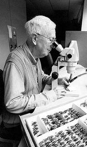 Charles Michener, curator emeritus of entomology at Kansas University's Natural History Museum, uses a microscope to inspect bees from the tropical regions of the Americas.